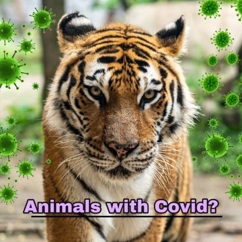Animals with Covid?