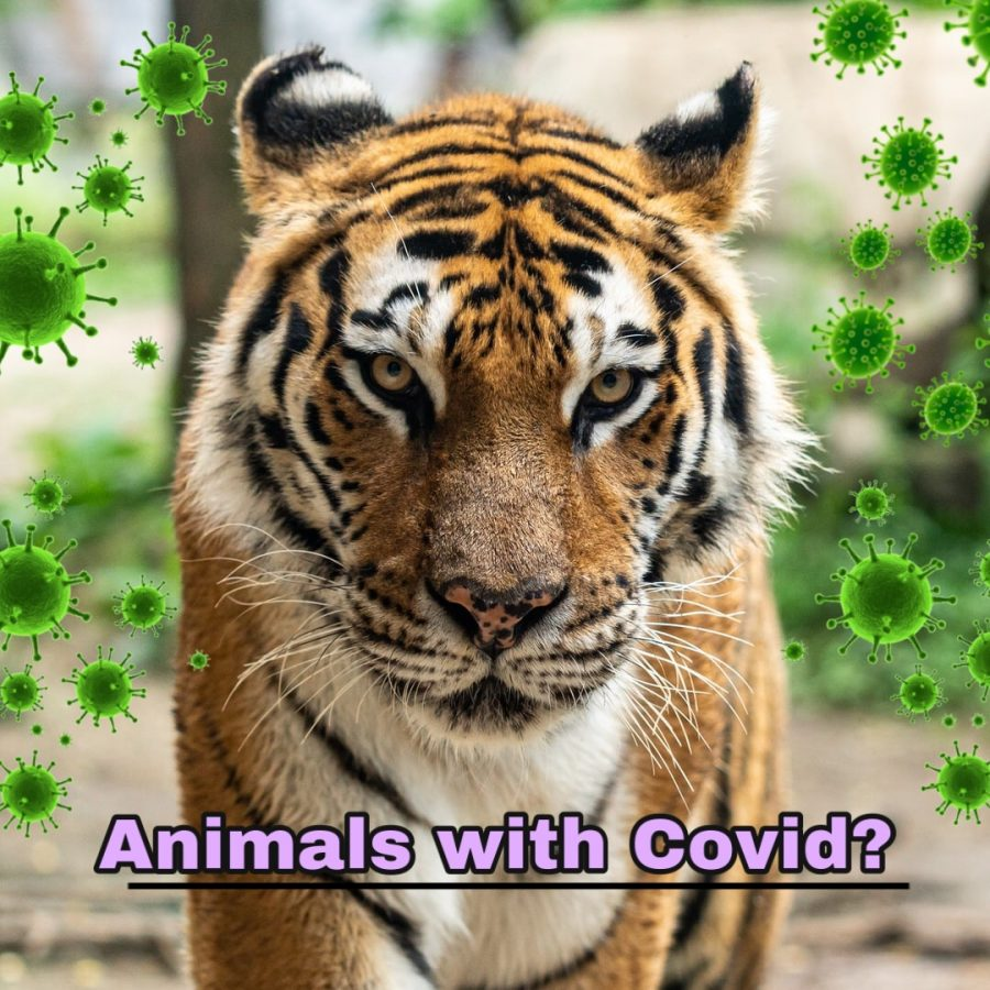 Animals+with+Covid%3F